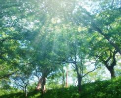 日光が射し込む森