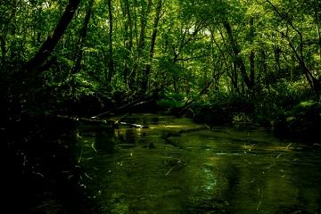 森の中の水上で光る蛍