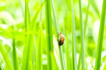 草むらの中の空蝉