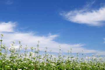 秋の空と蕎麦の花