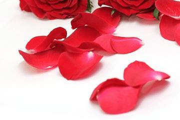 赤いバラの花びら