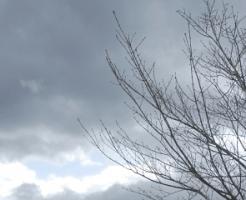 冬の空と枯木立