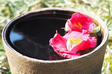 鉢の水に浮かぶ椿の花