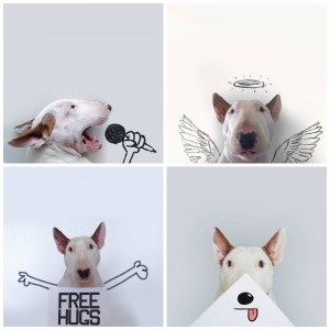 Friday Love !!! Finally it's ‎Friday‬... My favorite day of the week. Love your ‪‎dog‬ and be as playful as your dog... This star dog www.jimmythebull.com is amazing.