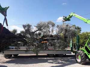 trasporto pianta