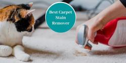 Best Pet Stain Remover for Carpets