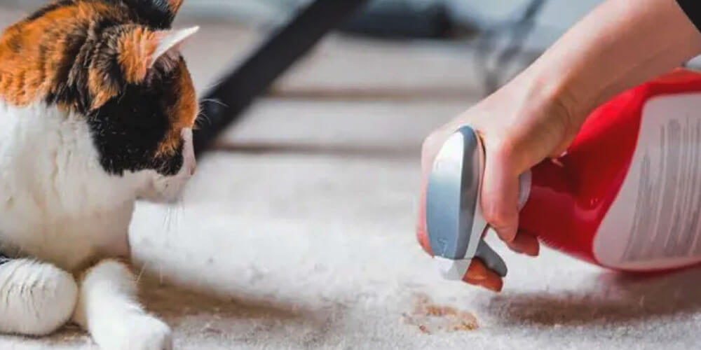 Safe Cleaners List in Home with Cats