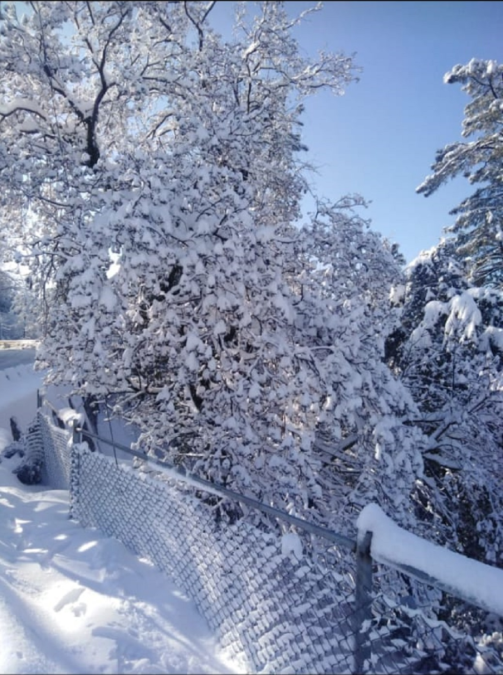 snowflake Lower Topa snowfall pictures
