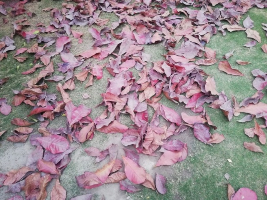 Scattered Leaves Photography