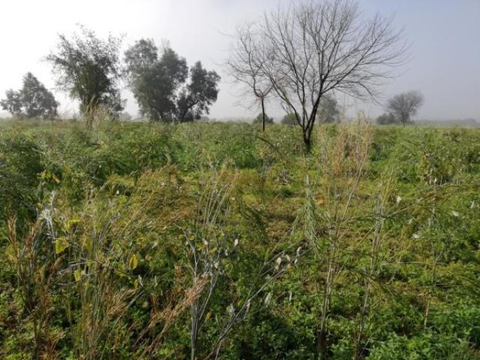green land photo