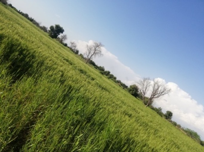 green land pictures