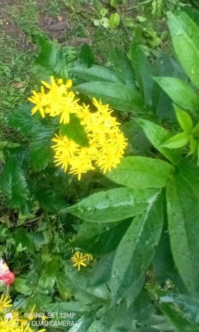 Flower Pic in Jahaz Banda