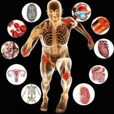 medical physiologist job description