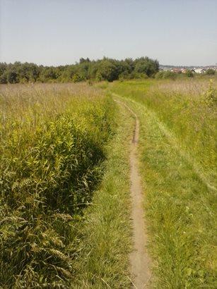 Krakowskie łąki do biegania:)