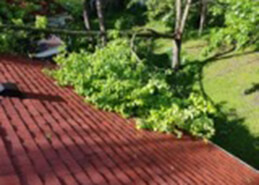 Removing tree limbs for roofing maintenance