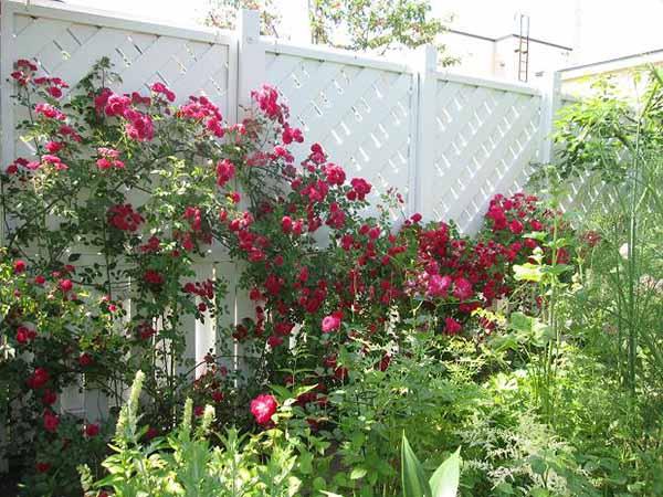花园和花园自己做到了
