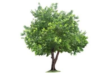 959772-tree