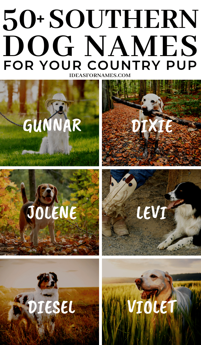 Southern Dog Names That Are Perfect For Your Country Pup #dog #dogs #dognames #furbaby #newdog #newpuppy #dogmom