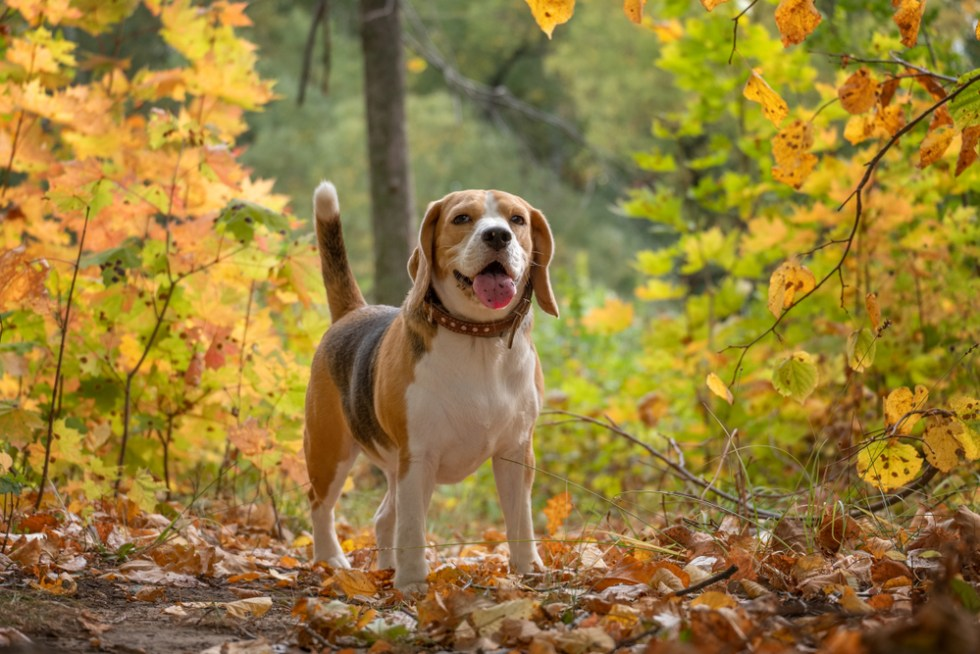 Southern Dog Names That Are Perfect For Your Country Pup