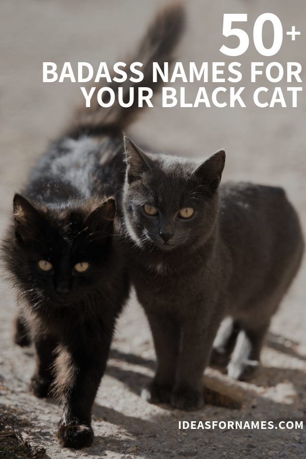 Best Black Cat Names That Are Just Plain Brilliant #cat #blackcat #ilovemycat #catlover #blackcatlove #blackcatsrule
