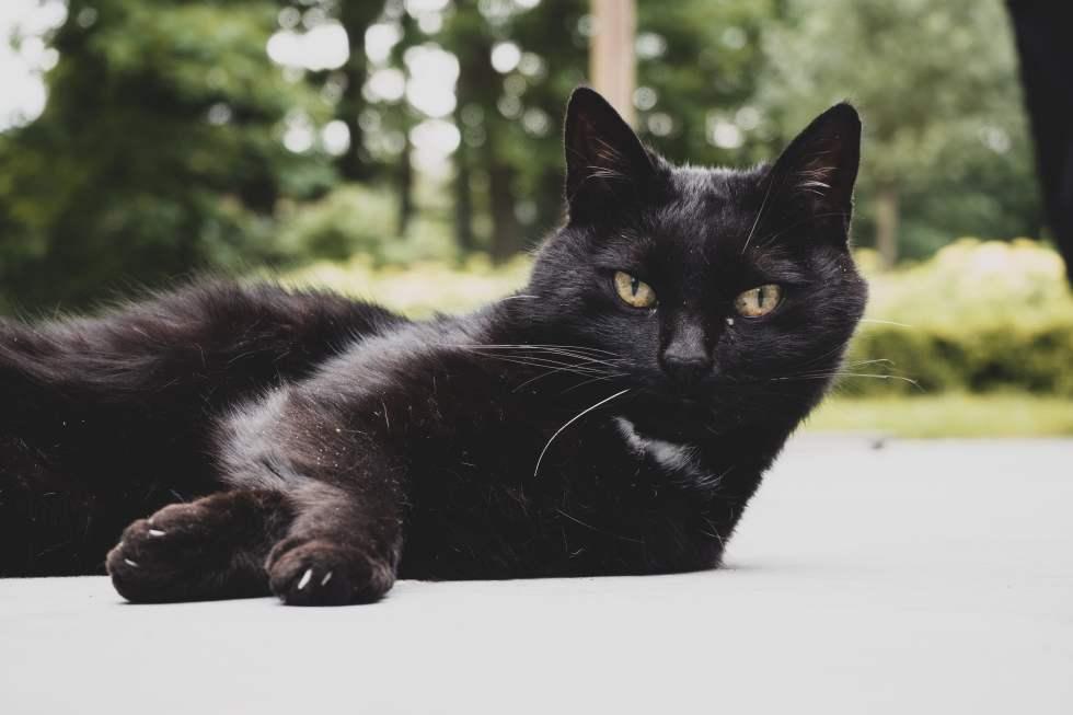 Best Black Cat Names That Are Just Plain Brilliant