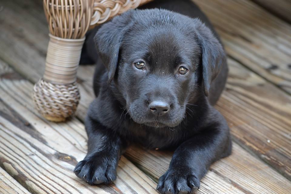 250+ Best Black Dog Names That Are Just Plain Brilliant
