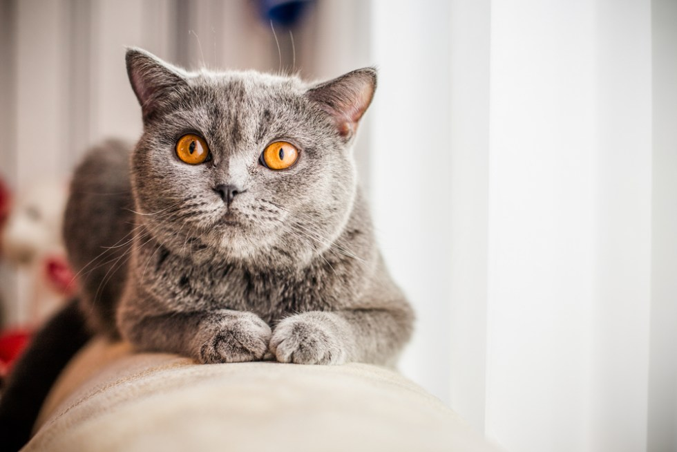 Glorious Grey Cat Names Perfect For Your Silver Kitty, Grey Kitten name ideas for male and female cats