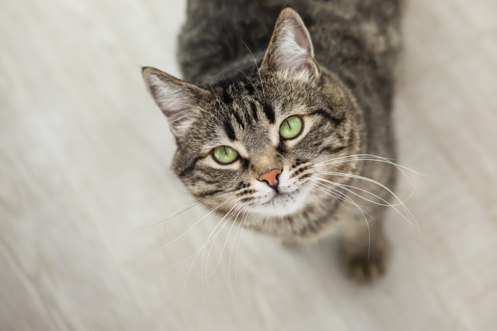 tabby cat, grey, names for tabby cats