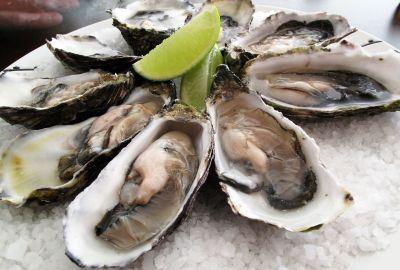 Edible Oyster Farming business