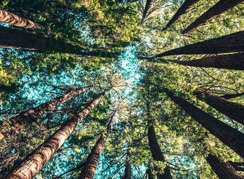 economía circular sostenibilidad