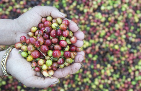 pequeños productores comercio justo