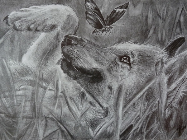 10 cool wolf drawings