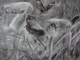 wolf drawings drawing cool pencil inspiration butterfly wolves cute deviantart amazing sketches playing hative pencils cat kiba rain freecreatives inspirational