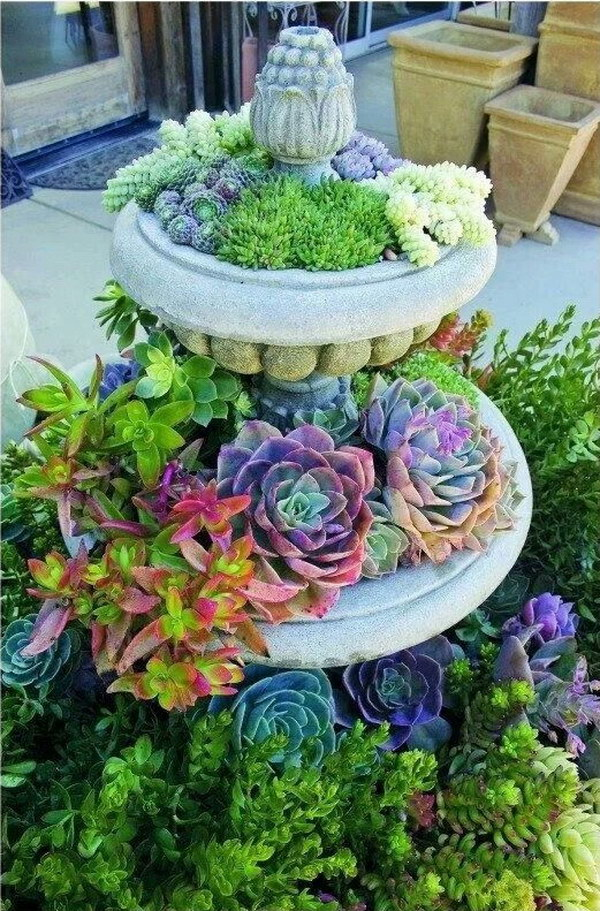 Creative Indoor And Outdoor Succulent Garden Ideas 2017