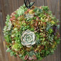 Wagon Wheel Chair Tufted Side Creative Indoor And Outdoor Succulent Garden Ideas 2017