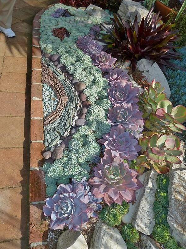 creative indoor and outdoor succulent