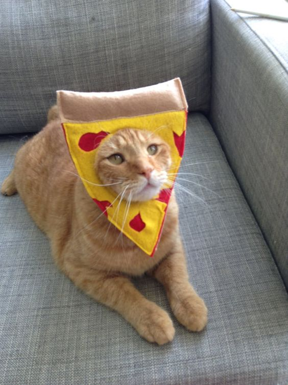 20 Cat Costumes for Halloween 2017