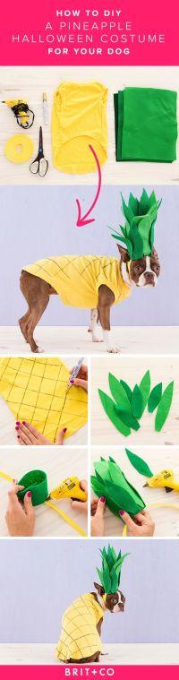 30+ Dog Halloween Costumes 2017