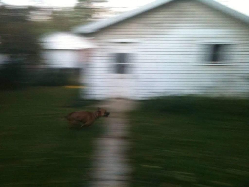 JDog running fast.