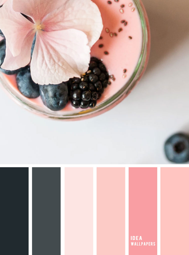 Blush pink and blackberry color scheme, pink and black color palette, colour palette #color #colorpalette