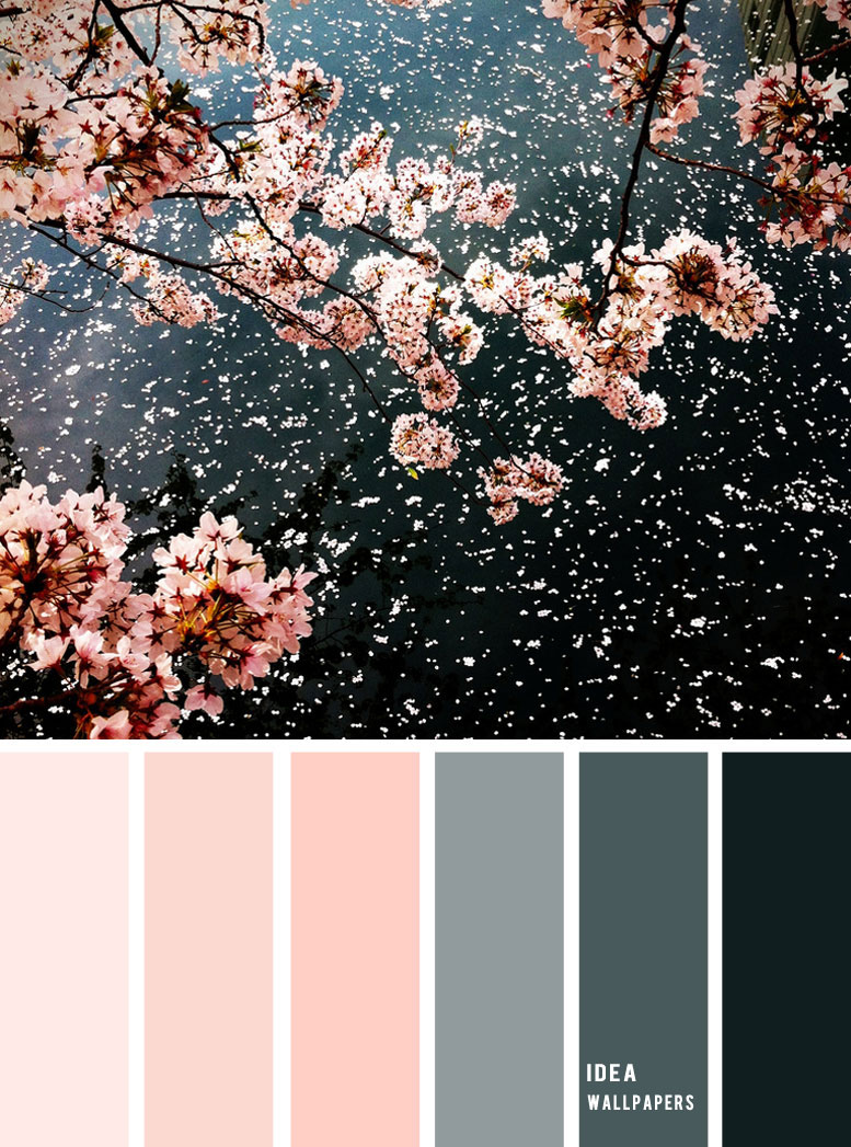 19 The Perfect Pink Color Combinations { Black + Blush + grey }, pink color palette, colour palette #color #colorpalette