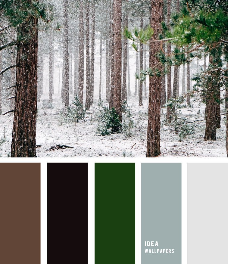 Pine Green and Grey Winter color palette , color palette , winter color palette, blue and grey , grey color palette #pantone #color #green ,pine
