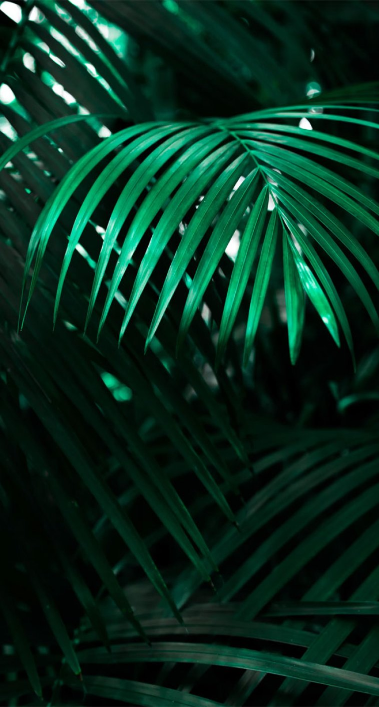 Looking for beautiful iPhone X wallpapers that have a calming affect, then check out these tropical leaves, botanicals, leaf iPhone wallpaper. - Tropical Leaves, Botanicals, Leaf Phone Wallpaper - iphone background #wallpaper #background
