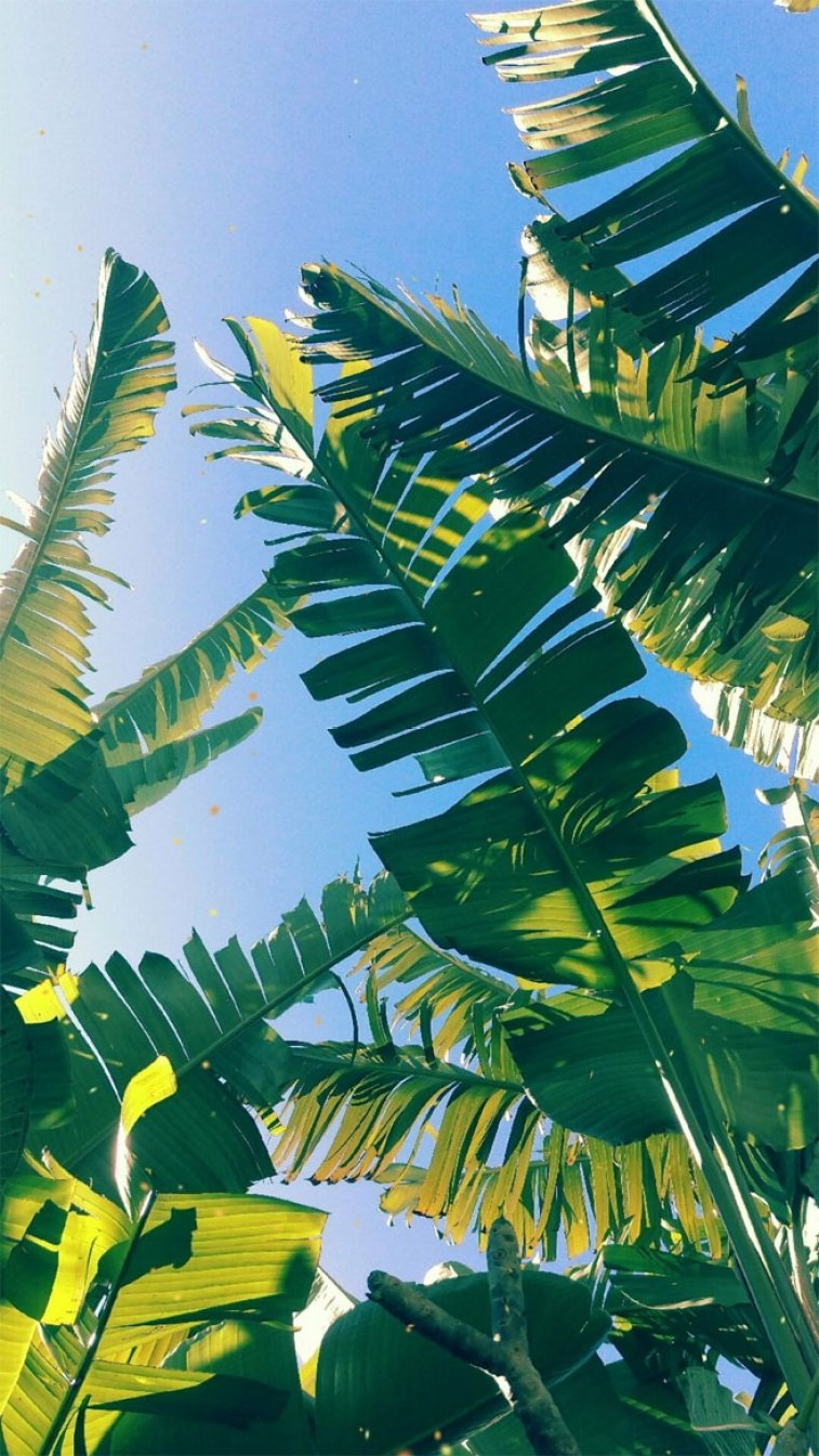 Looking for beautiful iPhone X wallpapers that have a calming affect, tropical leaves, botanicals, leaf iPhone wallpaper. - Tropical Leaves, Botanicals, Leaf Phone Wallpaper - iphone background #wallpaper #background