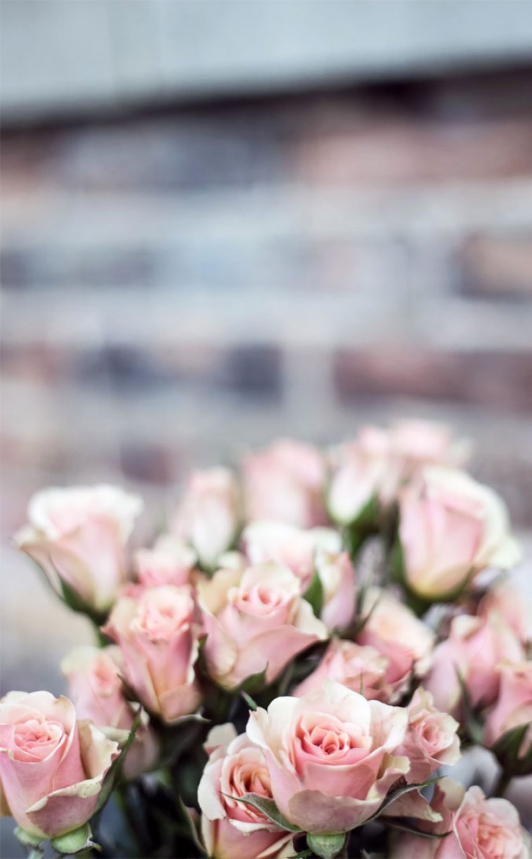 10 beautiful big bunch of flowers for Phone , wallpaper ,background ,lock screen, iphone wallpapers iphone Xs, iphone Xr