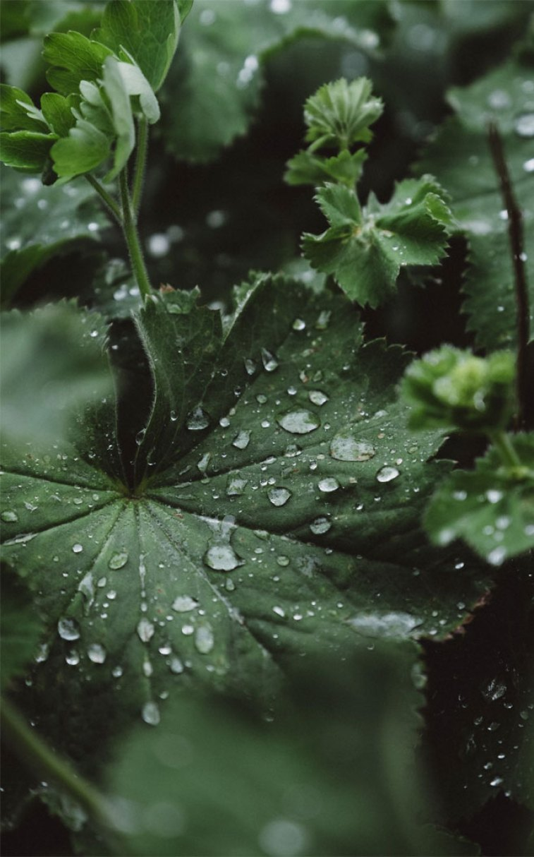 Green Leaves Rain Idea Wallpapers Iphone Wallpapers