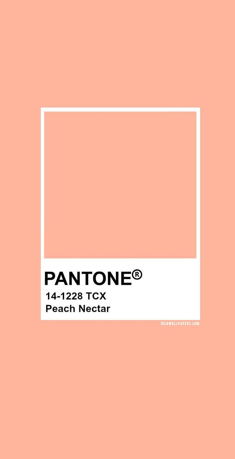 Pantone Peach Nectar : Pantone 14-1228 #color #pantone