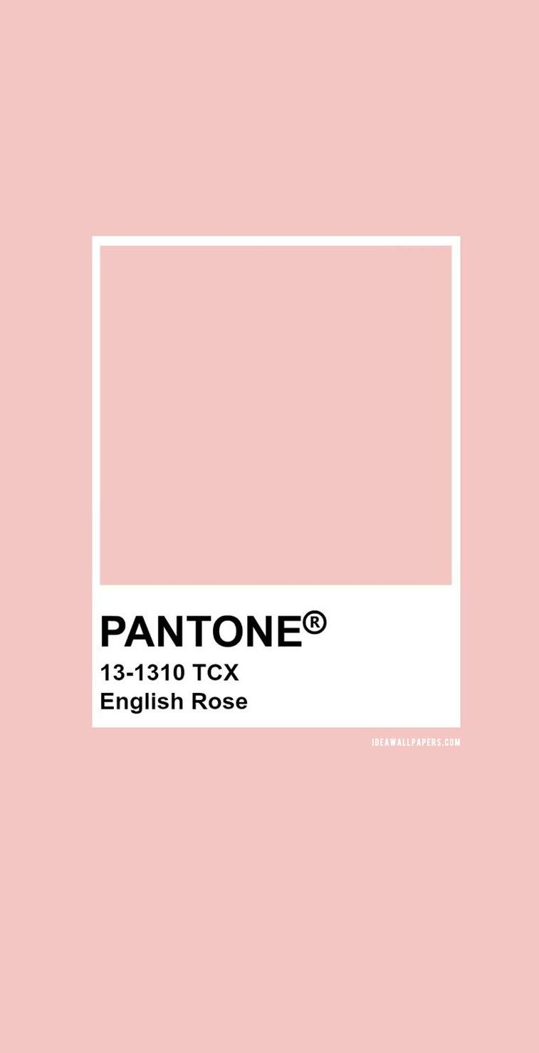 Pantone English Rose : Pantone 13-1310 #color #pantone