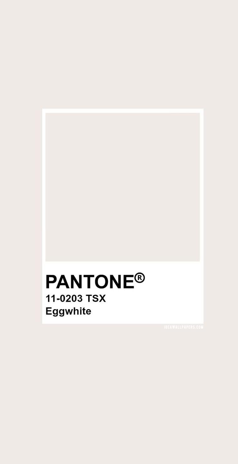 Pantone Eggwhite : Pantone 11- 0203 color palette #pantone #color #colors #colorpalette