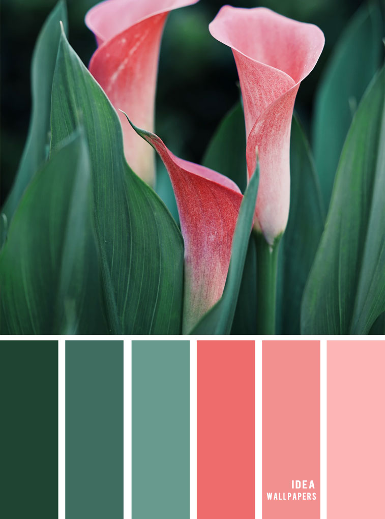 Green and Coral color combination #color #pantone #colorcombos #colorpalette #colors